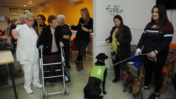 La Teràpia assistida amb gossos (TAG) permet treballar emocions i relacions socials.