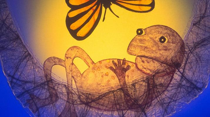 el príncep granota