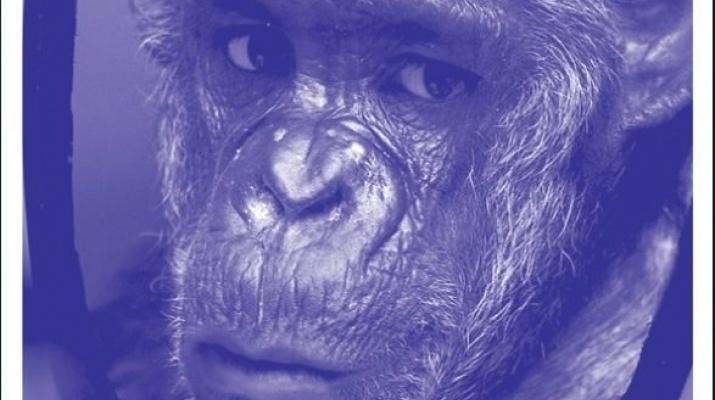 mono en el espejo