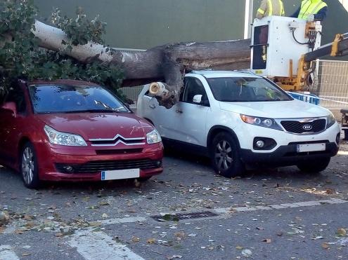 Arbre caigut pel vent sobre dos cotxes