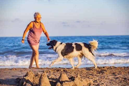 Neteja platja gossos