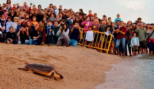 Alliberament d'una tortuga a la platja del Prat.