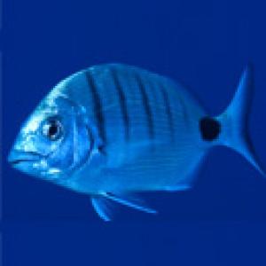 peix mar delta