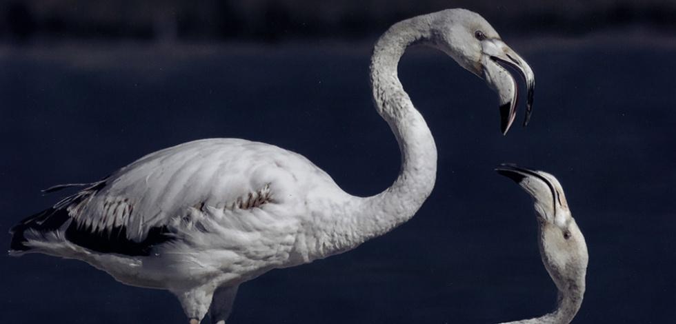 Birdwatching, observeu les aus del Delta